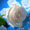 Современные красивые стихи о жизни, о любви и разлуке, стихотворение о любви Приснись…